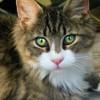 動物病院によってここが違う! 猫の避妊手術の方法(2)