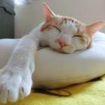 オス猫の去勢手術で問題解決できる3つのこと。
