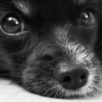 安心して犬を迎えに行こう。去勢手術後の様子から抜糸まで。