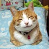 猫を去勢しないとどうなる? 知っておくべき4つのこと。