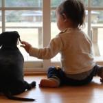 気軽には考えて欲しくない!太った犬への避妊手術のリスクとは。