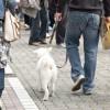去勢が肝心?! 意外と知られていない肛門周囲腺腫とオス犬の関係。