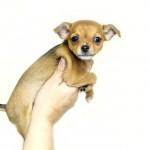 犬を飼って、避妊手術以外でやらないといけないコト。