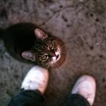 避妊していないメス猫で起こりやすい病気【猫の乳腺腫瘍】
