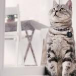 猫の避妊手術の前日にしておきたいコト