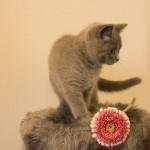 獣医師がすすめる!メス猫の避妊手術の麻酔中に一緒にしてあげたい処置はコレ!