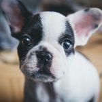 他の人っていつ手術を決心する?飼い主様が犬の避妊手術を考えるタイミング。