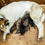 機会があれば仔犬を産ませてみたい…。避妊手術を行わない理由の落とし穴。