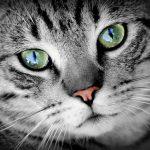 年齢不詳のオス猫を去勢するために必要なこととは?【保護猫の去勢】