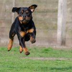 男の子らしく遊ばせたいなら去勢手術をするべき⁉︎オス犬の遊びとマナー。