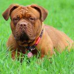 どのくらいでいつもの生活にもどれるの?去勢手術後の犬の様子を覗いてみよう。