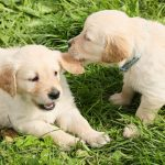 手術しないとどうなる!?獣医師が避妊手術を勧める理由とは。