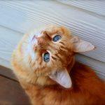 猫の避妊手術。よくありがちな8つの間違い