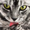 【猫の避妊手術】万が一のリスク防止の為に。術前検査はしっかり受けましょう。