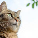 メス猫の避妊手術。こんな時は手術を延期してみては?