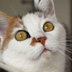 猫で起こりやすい子宮と卵巣の変化。ちょっと時期が経った猫の避妊手術。