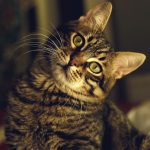 獣医師が猫の避妊手術をすすめるワケ