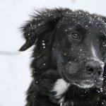 【メス犬の避妊】手術をする季節って大事?冬と夏の回復期間の違い。