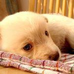 犬の避妊手術。失敗しないための5つの心得。