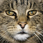 【オス猫】去勢するVS去勢しない。結局どっちが正しいの?