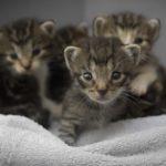 メス猫の避妊手術って本当に必要なの・・・?