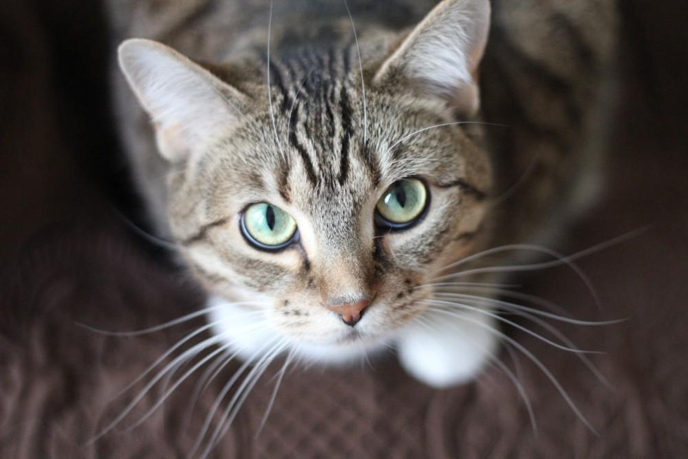 猫 マーキング しつけ