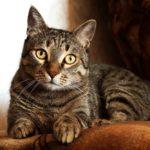 【メス猫避妊】陰部からの出血は発情?それとも病気?